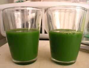 verde recém-colhida cevada