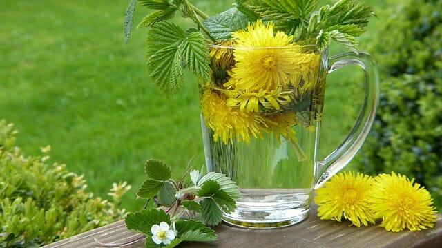 ervas purificantes