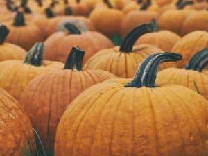 abóboras