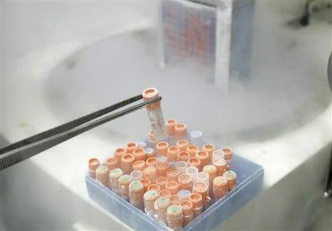 komorki macierzyste