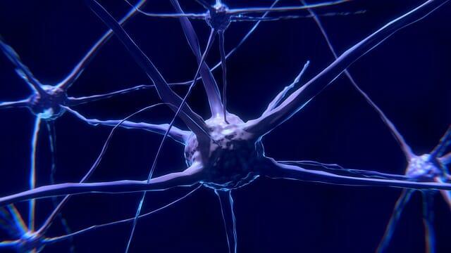 neurónio, célula nervosa